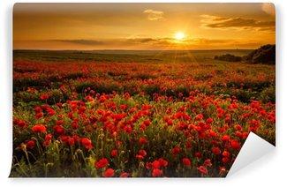 Vinyl Fotobehang Papaver veld bij zonsondergang