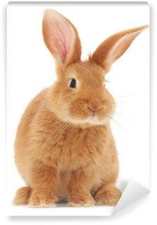 Vinyl Fotobehang Rabbit