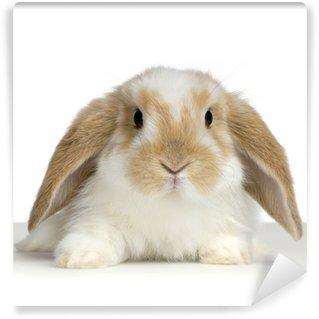 Vinyl Fotobehang Ram konijn op witte achtergrond