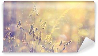 Vinyl Fotobehang Retro wazig gazon gras bij zonsondergang met flair. Vintage paars rood en geel oranje kleur filter effect gebruikt. Selectieve aandacht gebruikt.