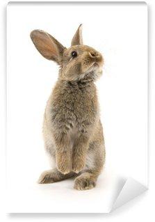 Vinyl Fotobehang Schattige konijn op wit wordt geïsoleerd