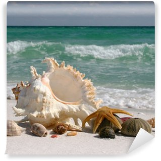 Vinyl Fotobehang Shells op White Sand Beach Florida's