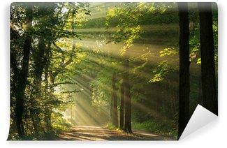 Vinyl Fotobehang Stralen van de zon schijnt door de bomen in het bos.