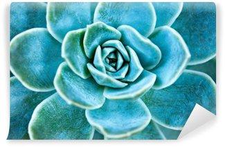 Vinyl Fotobehang Succulente bladeren van de planten.