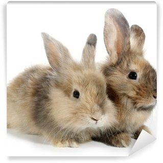 Vinyl Fotobehang Twee konijnen konijntjes op wit wordt geïsoleerd