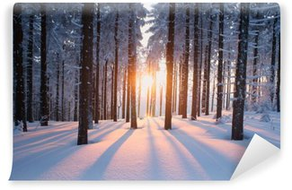 Vinyl Fotobehang Zonsondergang in het bos in de winter periode
