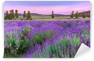Vinyl Fotobehang Zonsondergang over een zomer Lavendel veld in Tihany, Hongarije