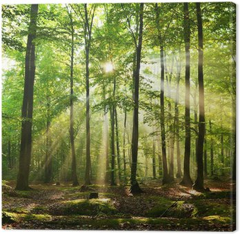Skov Fotolærred