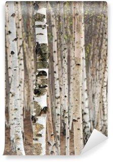 Fotomural de Vinil Birch trees in spring