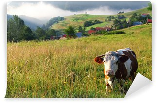 Fotomural de Vinil Cow in alp mountains, Switzerland