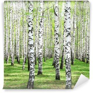 Fotomural de Vinil First spring greens in birch grove