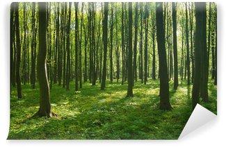 Fotomural de Vinil forest in spring