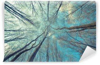 Fotomural Lavável Fundo das árvores Web