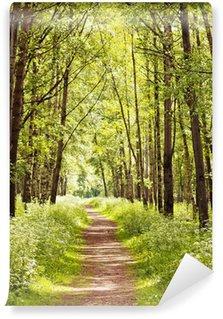 Fotomural de Vinil Path in a sunny summer forest