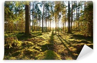 Fotomural Pixerstick Nascer do sol na floresta do pinho