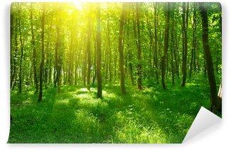 Fotomural de Vinil Sunlight in the green forest, spring time