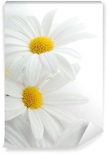 Fotomural de Vinil white spring marguerite