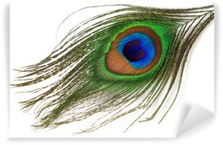 Fotomural Estándar Aislado pluma de pavo real