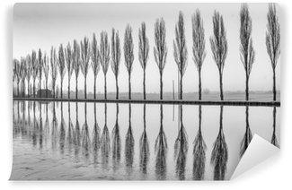 Fotomural Estándar Alberi riflessi sul lago all'alba en bianco e nero