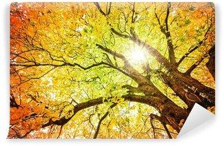 Fotomural Estándar Árbol de otoño