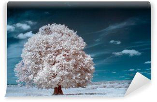 Fotomural Autoadhesivo Árbol blanco