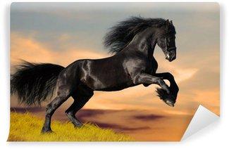 Fotomural Autoadhesivo Negro caballo Frisón galopa en la puesta del sol