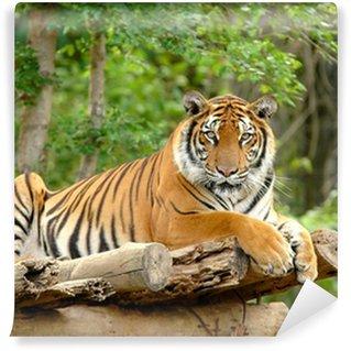 Fotomural Estándar Bengal tiger