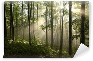Fotomural Estándar Bosque de hayas de primavera después de unos días de lluvia en una mañana de niebla