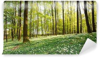 Fotomural Estándar Bosque Glade Spring