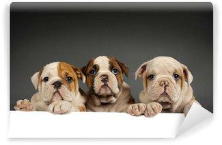 Fotomural Estándar Cachorros de bulldog inglés