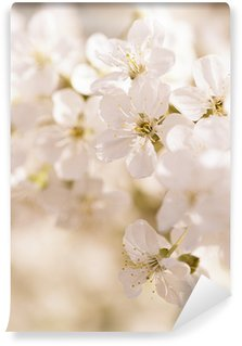 Fotomural Estándar Cherry blossoms