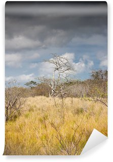 Fotomural Estándar Costa Rica - Foret tropicale seche