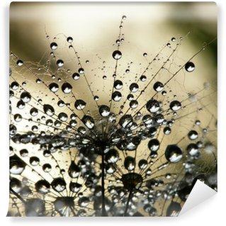 Fotomural Estándar Dandelion seed wet
