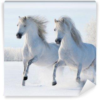 Fotomural Estándar Dos caballos blancos galope en el campo de nieve