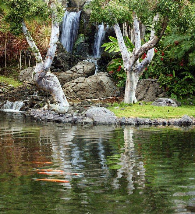 fotomural estndar estanque cascada y koi en jardn japons temas