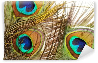 Fotomural Estándar Fondo de la pluma del pavo real