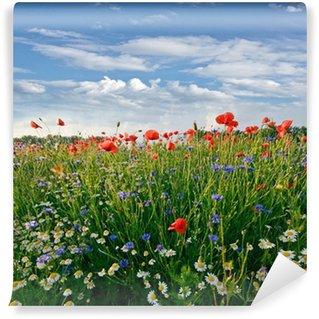 Fotomural Estándar Frühlingswiese mit Margeriten, Kornblumen und Klatschmohn