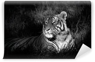 Fotomural Estándar Imagen monocroma de un tigre de bengala