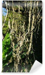 Fotomural Estándar Lianas, forêt tropicale, Jardín Botánico, Brésil.