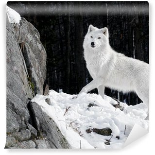 Fotomural Estándar Lobo ártico Retrato