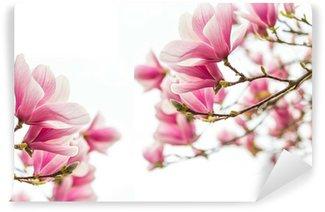 Fotomural Estándar Magnolia florece la primavera