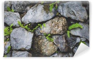 Fotomural Estándar Muro de piedra con planta de la naturaleza