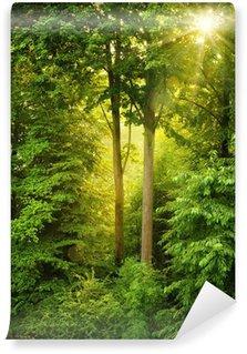 Fotomural Estándar Oro sol brilla a través de árboles