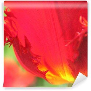 Fotomural Estándar Pétalos de tulipán rojo y amarillo