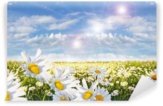 Fotomural Estándar Primavera: campo de flores de la margarita con el cielo azul y las nubes