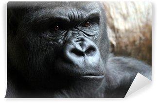 Fotomural Estándar Retrato de un gorila macho