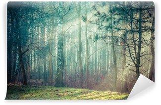 Fotomural Estándar Road y los rayos de sol en una fuerte niebla en el bosque, Polonia.