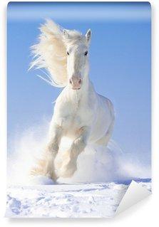 Fotomural Estándar Semental del caballo blanco corre al galope en el foco delantero