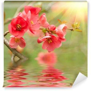 Fotomural Estándar Spring blossom reflejada en el agua