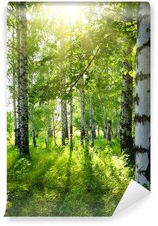 Fotomural Estándar Verano bosque de abedul con sol